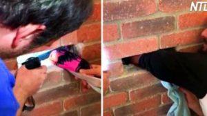 (영상) 위험천만한 벽돌 속에 갇혀있던 아기 고양이 구출 대작전