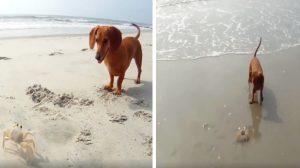 (영상) 개와 게의 운명적인 만남, 떠나려는 게와 붙잡는 개의 애틋한 사랑