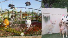 사무실 칸막이가 되기 전, 탈출해서 취재한 '고양국제꽃박람회 생생 탐방기'