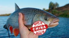 절대 먹으면 안 되는 '중국 수입식품'