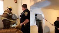 (영상) 난데없이 가정집 천장에서  떨어진 너구리 가족 포획작전