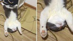 (영상) 기절한 고양이 위로 흐르는 고주파음의 정체