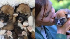 """(영상) """"이래 보여도 늑대의 후예"""" 호주 SNS 난리난 아기 딩고 쌍둥이들"""