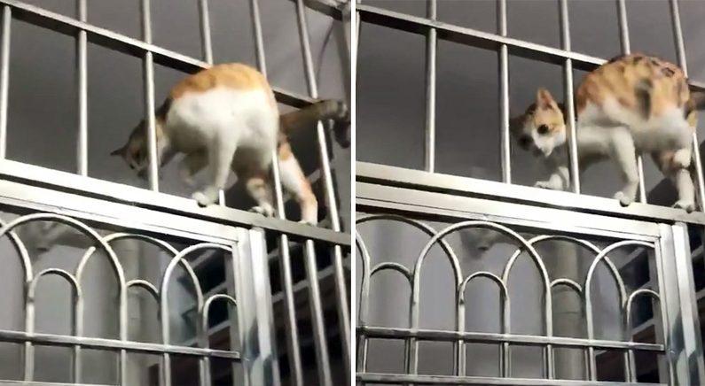 (영상) 유연한 동작으로 S자를 그리며 철창살을 통과하는 고양이