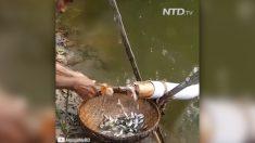 '때로는 전통이 더 먹힌다' 물고기가 알아서 걸어들어오는 통발 만드는 방법(영상)