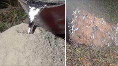 (영상) 개미집에 녹은 알루미늄을 부은 뒤 파내자 드러나는 '멋진 거대 지하 도시'