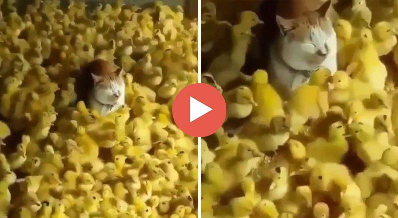 배경에 녹아들어서 보이지 않게 된 고양이(영상)