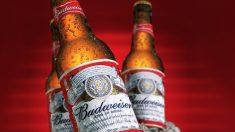 '버드와이저가 갑자기 맥주 생산을 중단한 이유' (영상)