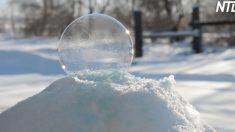 (영상) '물방울'이 '눈의 보석'으로 바뀌는 아름다운 자연의 마술을 감상하세요