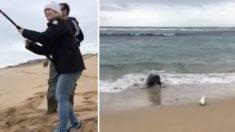 (영상) 잡은 물고기 따라온 어마어마한 손님의 등장, 내놓으라는 듯이 해변을 뛰어오는데..