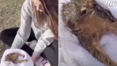 """(영상) """"너 뭐 한 거야!?"""" 여학생이 다람쥐를 수건에 감싸고 뜨거운 바람을 쐬인 이유"""