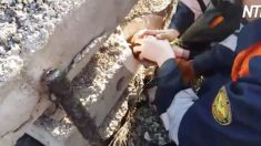 (영상) 비좁은 콘크리트 구멍 속에서 옴짝달싹하지 못하던 연약한 생명체