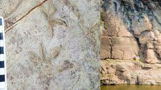 반구대 암각화에서 정체불명 동물 화석 발견