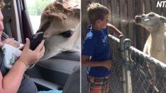 (영상) 동물에게 가까이 가지 말라는 경고를 무시했을 때 벌어지는 '무시무시한 일'