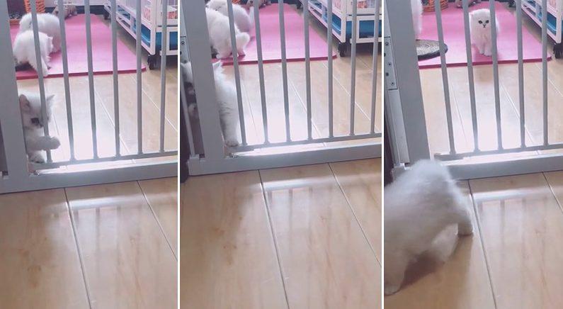 """아기 고양이의 방탈출..""""수수께끼는 풀렸다""""(영상)"""