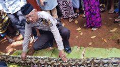 인도네시아서 7m 길이 비단뱀이 여성 통째로 삼켜
