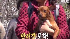 북한에서 처음 만난 반려견 이름에 네티즌 '깜짝'