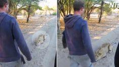 (영상) 남자들이 다가오자 숨죽여 있다가 용수철처럼 튀어 오르는 사자의 반전