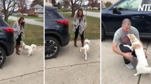 (영상) 6개월 만에 돌아온 군인, 몰래 강아지에게 다가가 놀래주기