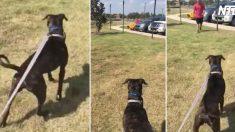(영상) 5개월 만에 군인 주인을 만나게 된 개.. 꼬리 떨어지는 열렬한 반응