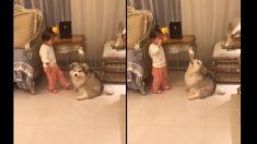 (영상) '네가 울면 나도 울고 싶어져'..어린 주인을 달래는 강아지