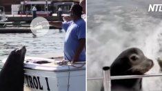 (영상) 배고프면 보트에 올라타 '무료 음식' 요구하는 귀여운 바다사자들