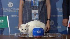 """(영상) 월드컵 개막전 승부 예측하는 신통방통 고양이 """"관심집중"""""""