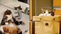 어디에나 '쏙' 들어가 있는 고양이 사진 23