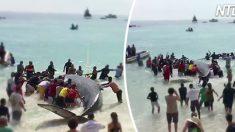 (영상) 바닷가에 좌초됐던 거대한 고래를 돌려보내자 고래가 감사함을 표시하는 법