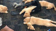 공항에서 찍은 재미난 사진들