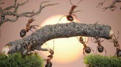 '개미 세계에 살다 온 남자'