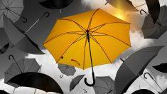 비를 막아주는 우산, 그 손잡이에 관한 지식(영상)