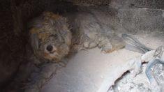 그리스 최악 산불, 살아남은 기적의 개(영상)