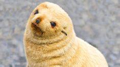 무장 해제 시키는 귀여운 아기 동물들