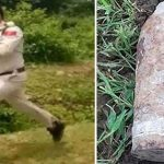 학교서 발견된 폭탄 어깨에 짊어지고 1km 내달린 경찰