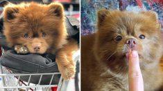 너무 커 버려진 강아지, 귀여움으로 인스타그램 스타 떠올라