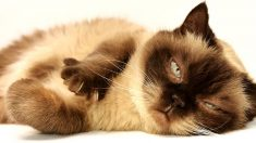 개보다 고양이 좋다는 사람의 성격, 철저히 분석해봤다