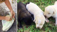 '갓 태어나 버림받은 강아지들', 비닐봉지 담겨 발견 (영상)