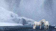 아이슬란드의 신비로운 풍경과 말들