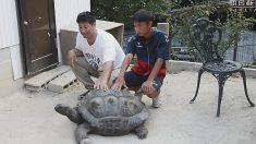 탈주 시도 대형 거북이, 2주간 불과 '100여 미터' 도망