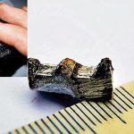 석탄 속에서 발견된 3억년 전 톱니바퀴