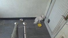 빈집 앞에서 계속 주인 기다리는 강아지에 시청자 눈물