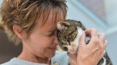 13년만에 돌아온 고양이에 주인 '울컥'