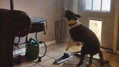 뒤뜰 스프링클러, 거실 끌어와 무더위 식히는 개
