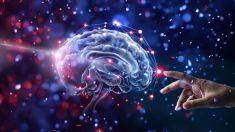 '1천억 뉴런으로 이뤄진 작은 우주' 뇌에 대해 밝혀진 것들