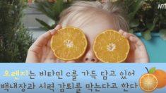 종일 스마트폰에 벌써 노안? 시력 회복에 좋은 식품들