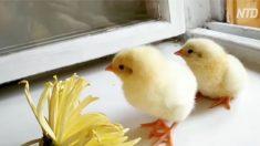 창틀에 놔둔 채 깜빡하고 3주간 여행 다녀 왔더니.. '신선한' 마트 달걀의 반전