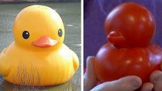 세상에서 가장 귀여운 '오리' 토마토