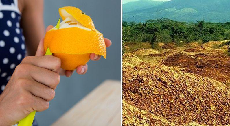 먹고 남은 '오렌지 껍질'을 황무지에 버렸더니 생긴 기적