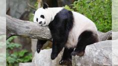 출산 앞둔 동물들의 귀여운 만삭 사진들